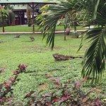 In der Mawamba Lodge herrscht Tiersicht-Garantie!