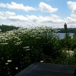 Looking through the daisies to Lake Rosseau from our table.
