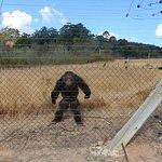 Jane Goodall Chimpanzee Eden Sanctuary Foto