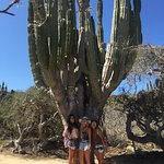 Tour of the cacti