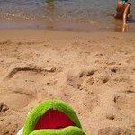 Sunbathing Frog!