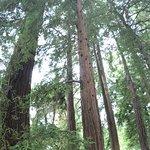 Foto de Santa Barbara Botanic Garden