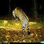 Tamandua Biological Reserve