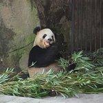 Foto de Chongqing Zoo (Chongqing Dongwuyuan)