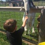 Foto de Plum Loco Animal Farm