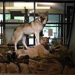 wildlife exhibit