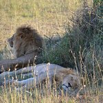 Safari outside Simba Lodge
