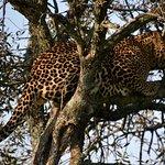 Foto de Mara Simba Lodge