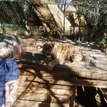 Playing with Sultan the tiger cub
