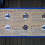 Sign detailing release strategies for 4 species of salmon