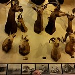 Here I am in awe of these animals on display. The B&W photos are actual safari photos from 1950'