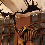 Kelvingrove Art Gallery & Museum, Glasgow..