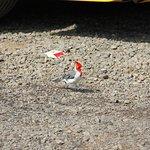 Photo de Kilauea Point National Wildlife Refuge