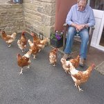 Very friendly hens.
