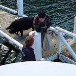 Foto Pelorus Mail Boat