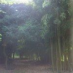 Pequeño bosque de bambú.