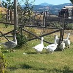 Photo de Agriturismo Poggio Mario