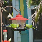 Birds feeders are right across the street...