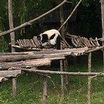 Parc Animalier et Botanique de Branféré
