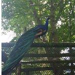 York's Wild Kingdom Zoo and Fun Park ภาพถ่าย