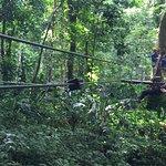JungleQui Rainforest EcoAdventure Park