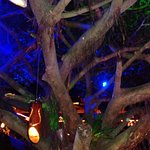Tree House Restaurante & Cafe Foto