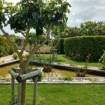 Jardin au phare de Chassiron