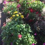 Beautiful garden pics