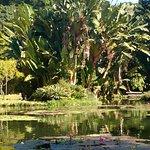 Lago Frei Leandro - Jardim Botânico/RJ