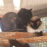 Photo de Best Friends Animal Sanctuary