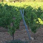 Photo de le clos des vignes