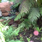Small selection of plants in tropical house, Mount Stuart