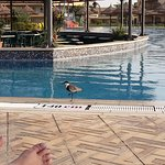 Photo of Maritim Jolie Ville Kings Island Luxor