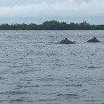 Foto de Dolphin Bay Preserve