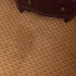 One of many stains on carpet.