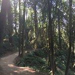 Forest Park Foto