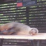Foto di Red Mangrove Aventura Lodge