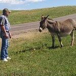 Custer State Park Foto