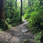 Well established trail.