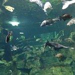 Photo de Tennessee Aquarium