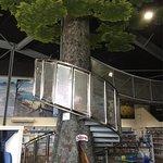 the Kauri tree staircase