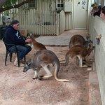 Foto de Josephine's Gallery & Kangaroo Orphanage