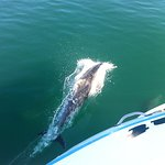 Dolphins really close to the boat
