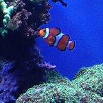 Foto de Monterey Bay Aquarium