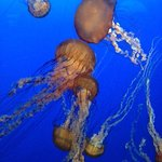 Foto di Monterey Bay Aquarium
