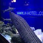 K-Hotel Foto