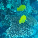 Foto di Faraana Reef Resort