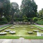 Seerosenteich im Rosengarten