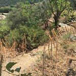 Jardin Mediterranean du Mas de la Serre