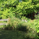 la mare dans le jardin